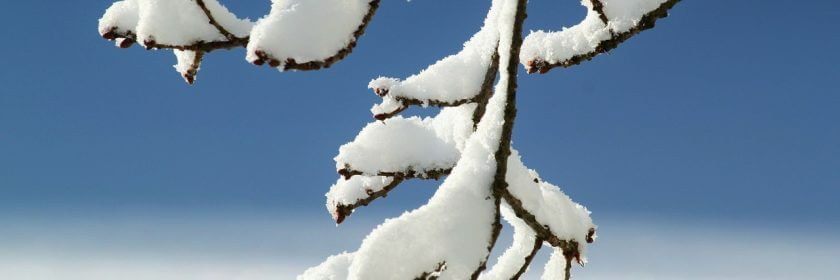snow on branch, pool closing services